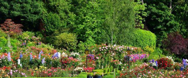 blog_rose_garden_lawn_2015[1]