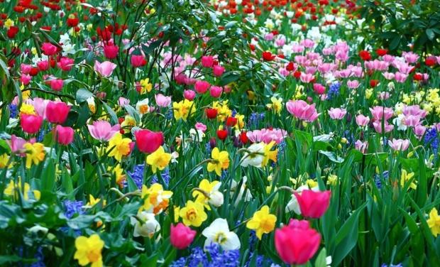 spring-flowers-wallpaperflower-wallpaper-background-hd-desktop-widescreen-1200x728