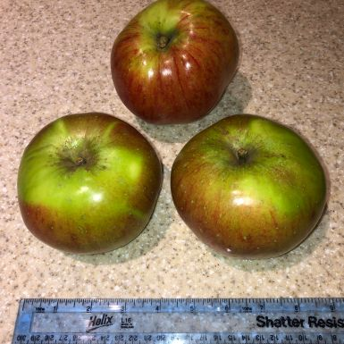 Jon Homan. Three Apples